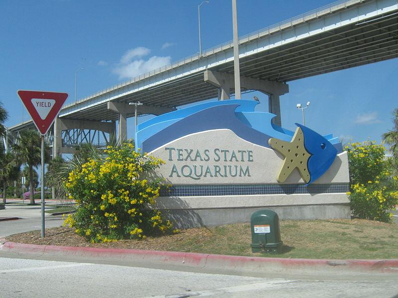 Texas State Aquarium Exhibit In Corpus Christi Tx