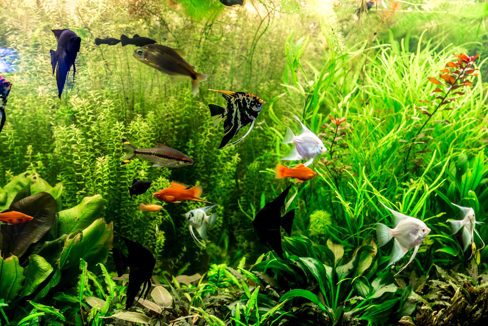 Fish aquarium guide - Fish Aquarium Guide